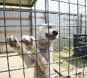 На набережной Упы в Туле открылся зоопарк