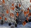 Погода в Туле 2 ноября: небольшой снег, ветрено, до +5
