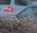 На выходных в Тульской области температура будет превышать климатическую норму