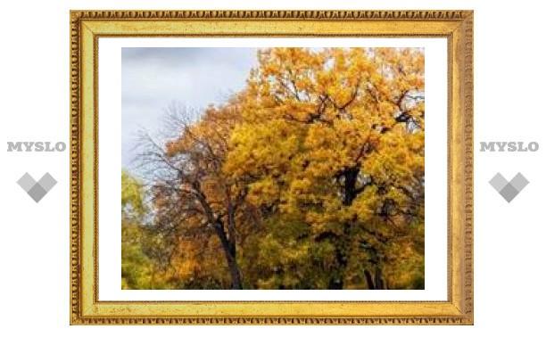 В Тулу пришла золотая осень