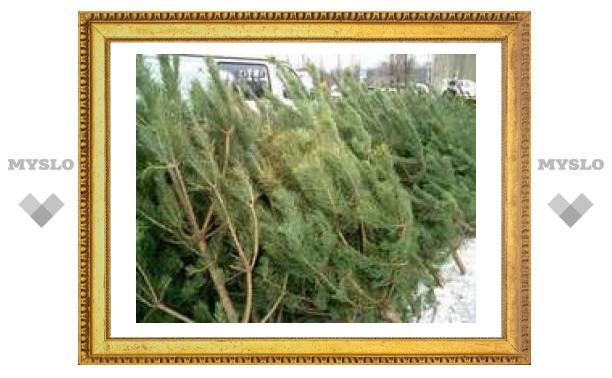 Новогодние елки оказались опасными для здоровья