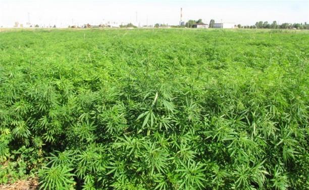 Тульская полиция задержала «нарко-агронома»