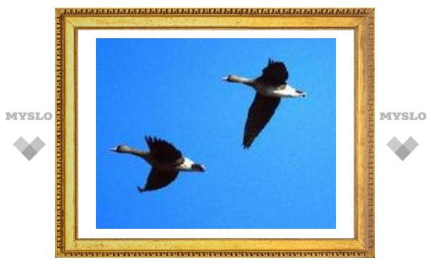 28 сентября: гуси летят - зиму на хвосту тащат