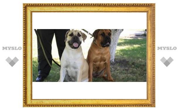 В Туле собрались самые красивые собаки