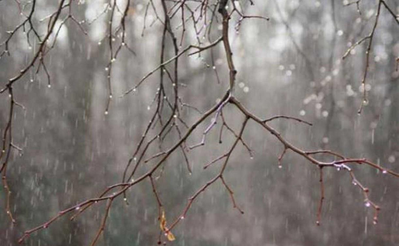 Погода в Туле 8 апреля: ветрено, дождливо и тепло