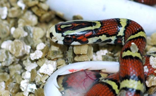Тульский экзотариум приглашает на выставку детенышей змей