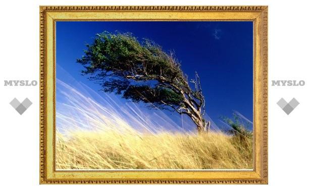 В Туле поднялся сильный ветер