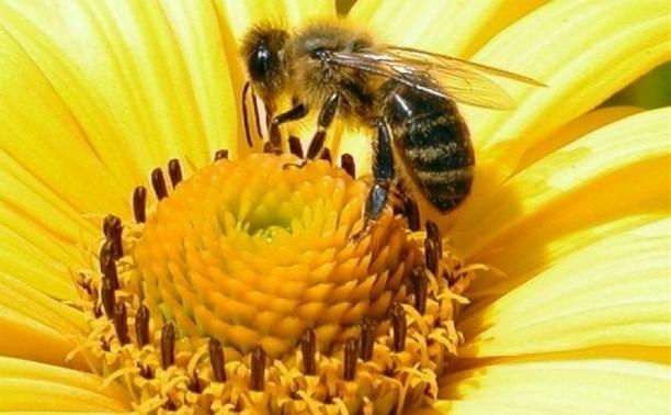 Российские пчеловоды просят максимально сократить ввоз иностранных сладостей