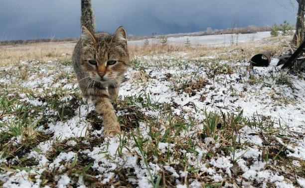 Солнце, снег, метель и сильный ветер: туляков предупреждают о непогоде