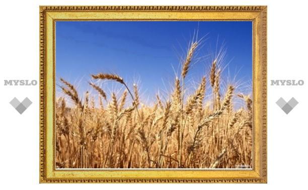 Тульская область вошла в семерку лидеров по сбору урожая