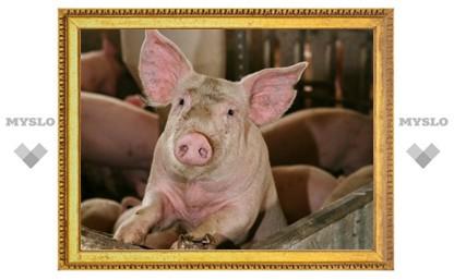 Туляки рискуют оказаться без свинины