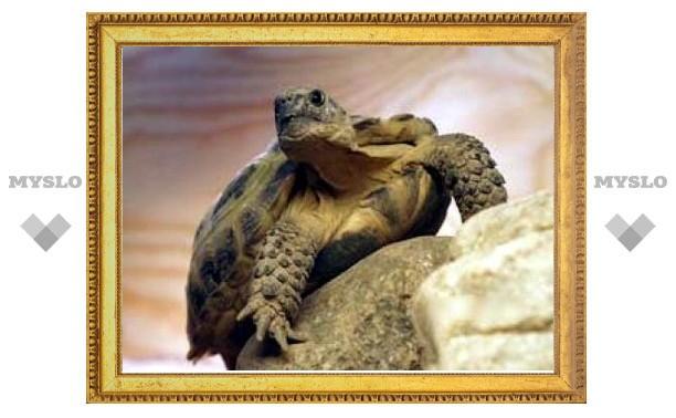 В Туле раскроют загадки черепах