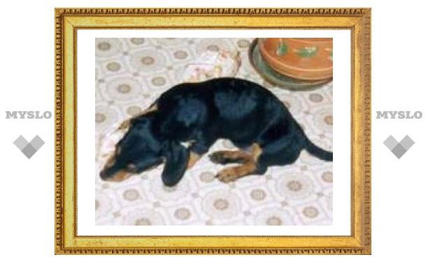 Пропала собака. Помогите найти любимого питомца