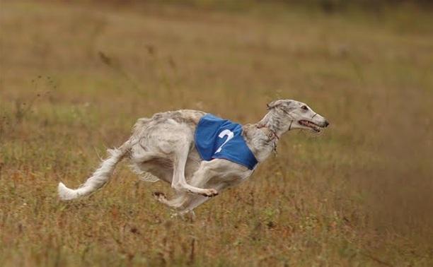 Туляков приглашают на собачьи бега