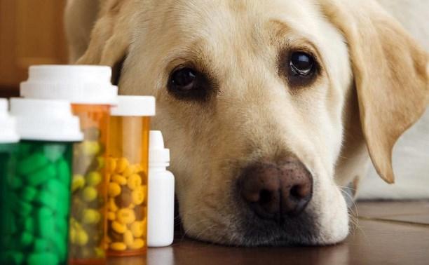 В Туле «Пираньи» незаконно продавали лекарства для животных