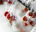 МЧС: В Тульской области за сутки похолодает на 10-12ºС