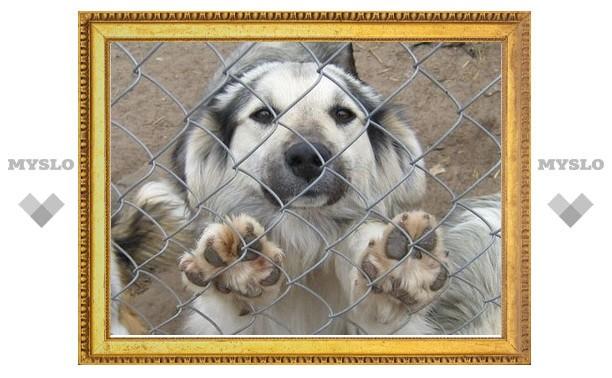 Приют для животных просит о помощи
