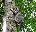 В Туле на улице Приупской пятый день на дереве сидит кошка