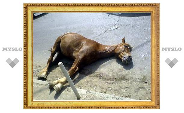 Под Тулой «Соболь» сбил беременную лошадь