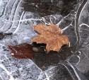 Погода в Туле 28 сентября: осенний холод и без осадков