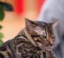 Туляков приглашают на выставку кошек