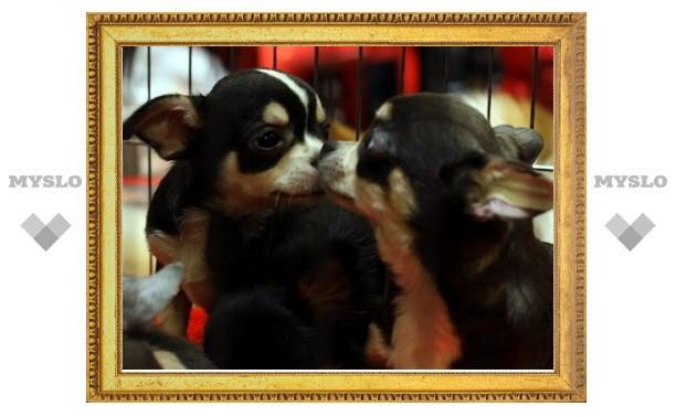 В Туле прошла выставка собак и кошек