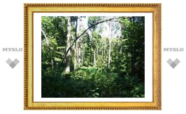 Лондонская галерея Tate обзаведется первобытным лесом