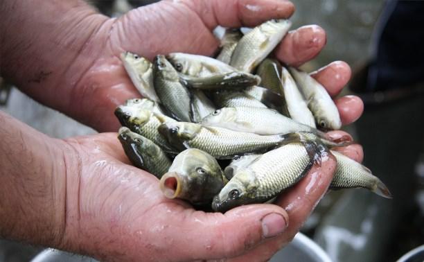 В Новомосковском районе в водоемы выпустили 1,5 тонны малька