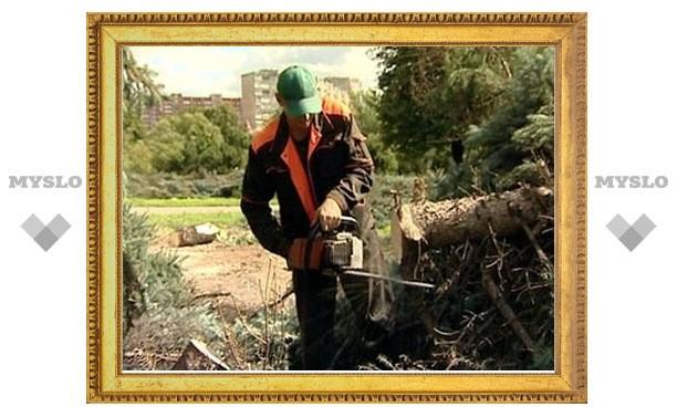 В Тульской области депутат незаконно рубил деревья
