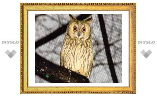 10 января: глаза совиные за сараем