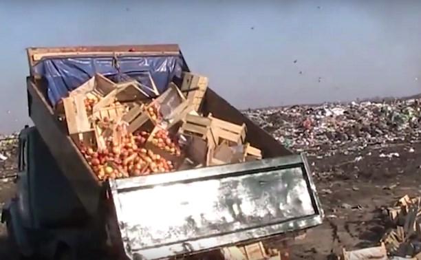 На мусорном полигоне в Туле уничтожили 22 тонны украинских яблок