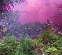 В розовый цвет Товарковское водохранилище окрасила водоросль хлорелла