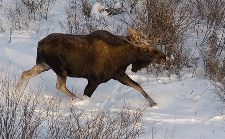 Тульский краеведческий музей приглашает на лекцию «Лесной великан»