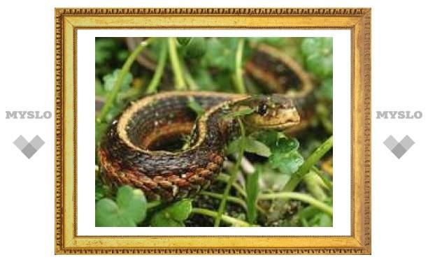 22 июня: Змеиный день