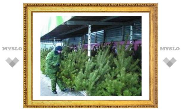 Где в Туле купить елку