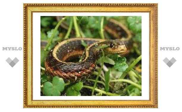 25 сентября: Вереницей змеи ползут в лес