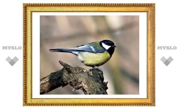 12 ноября: день птички-синички