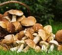 Синоптики: грибной сезон в Центральной России начнется на следующей неделе
