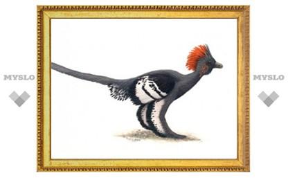 Палеонтологи впервые восстановили расцветку четырехкрылых динозавров