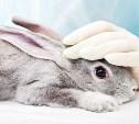 Новосибирские ученые спасут подопытных кроликов