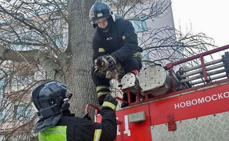 В марте новомосковские пожарные спасли с деревьев двух котов