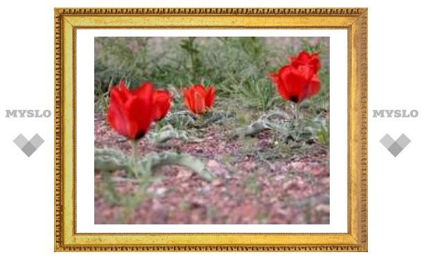 6 апреля: Ночь теплая - весна будет дружная