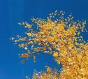 Погода в Туле 7 октября: переменная облачность и до +21°С