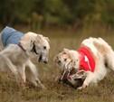 В Туле проходят собачьи бега