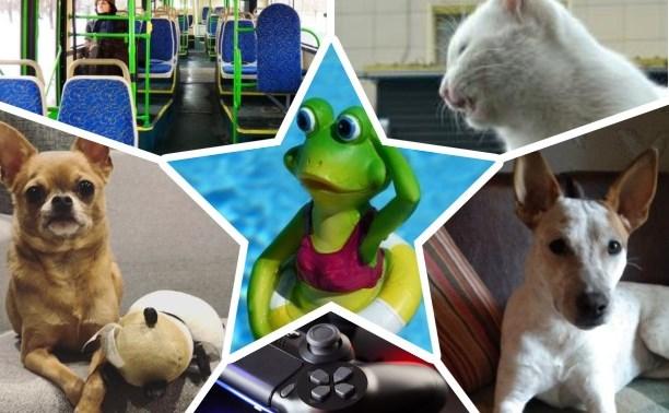 Антипаника от туляков: свадебные песни лягушек, игры на PS и много пёсиков