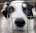 В Туле появилась псевдоофициальная служба по отлову собак?
