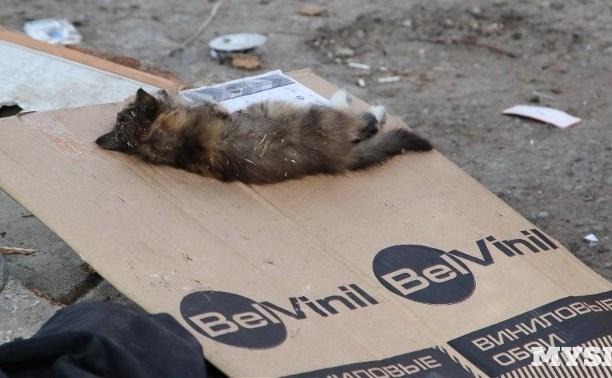 Житель плехановского табора убил котёнка на глазах у детей