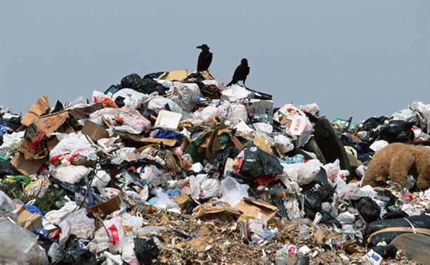 Евгений Авилов - тульскому блогеру: надо людей учить собирать мусор