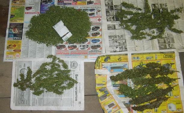 Тульские наркополицейские обнаружили плантацию марихуаны