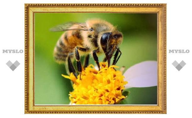 Биологи превратили пчел в ищеек